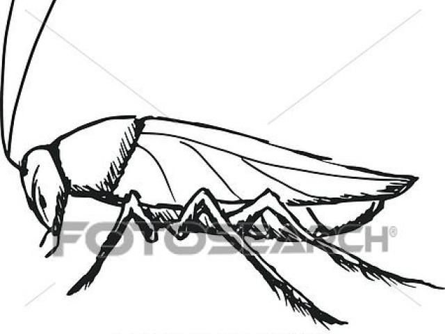640x480 Free Cockroach Clipart Drawing, Download Free Clip Art