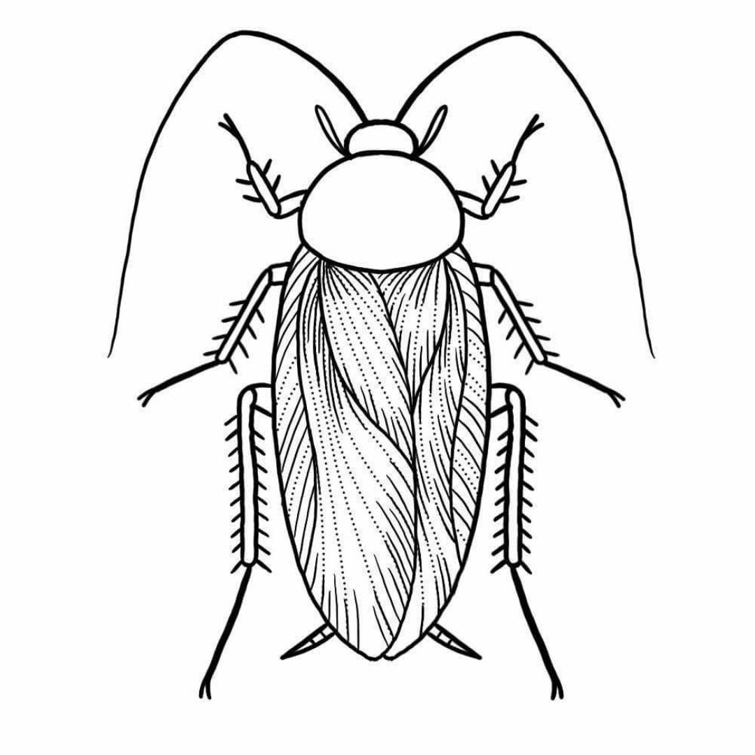 1080x1080 Cockroach Drawing Small For Free Download