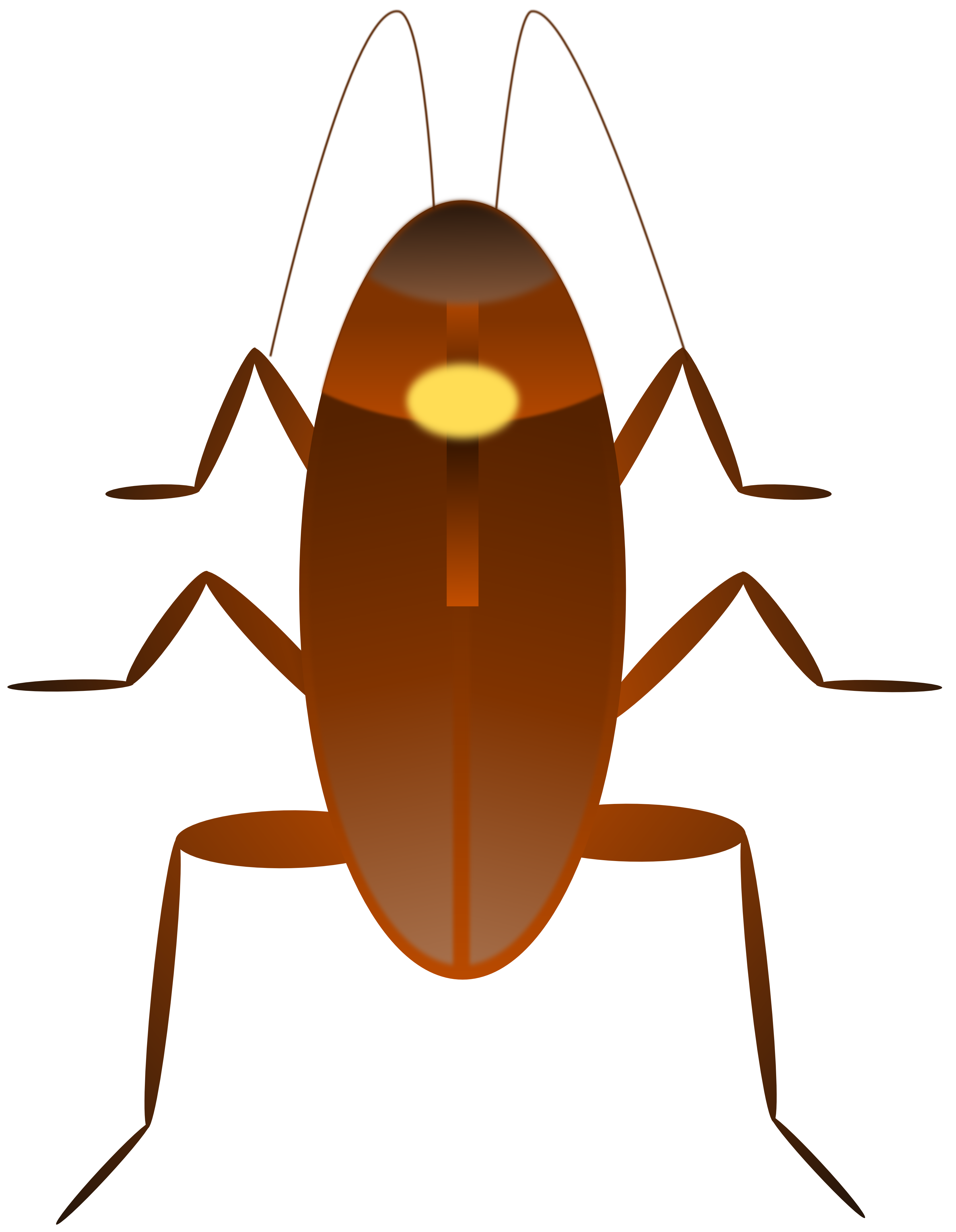 3333x4294 Roach Drawing Crawling Transparent Png Clipart Free Download