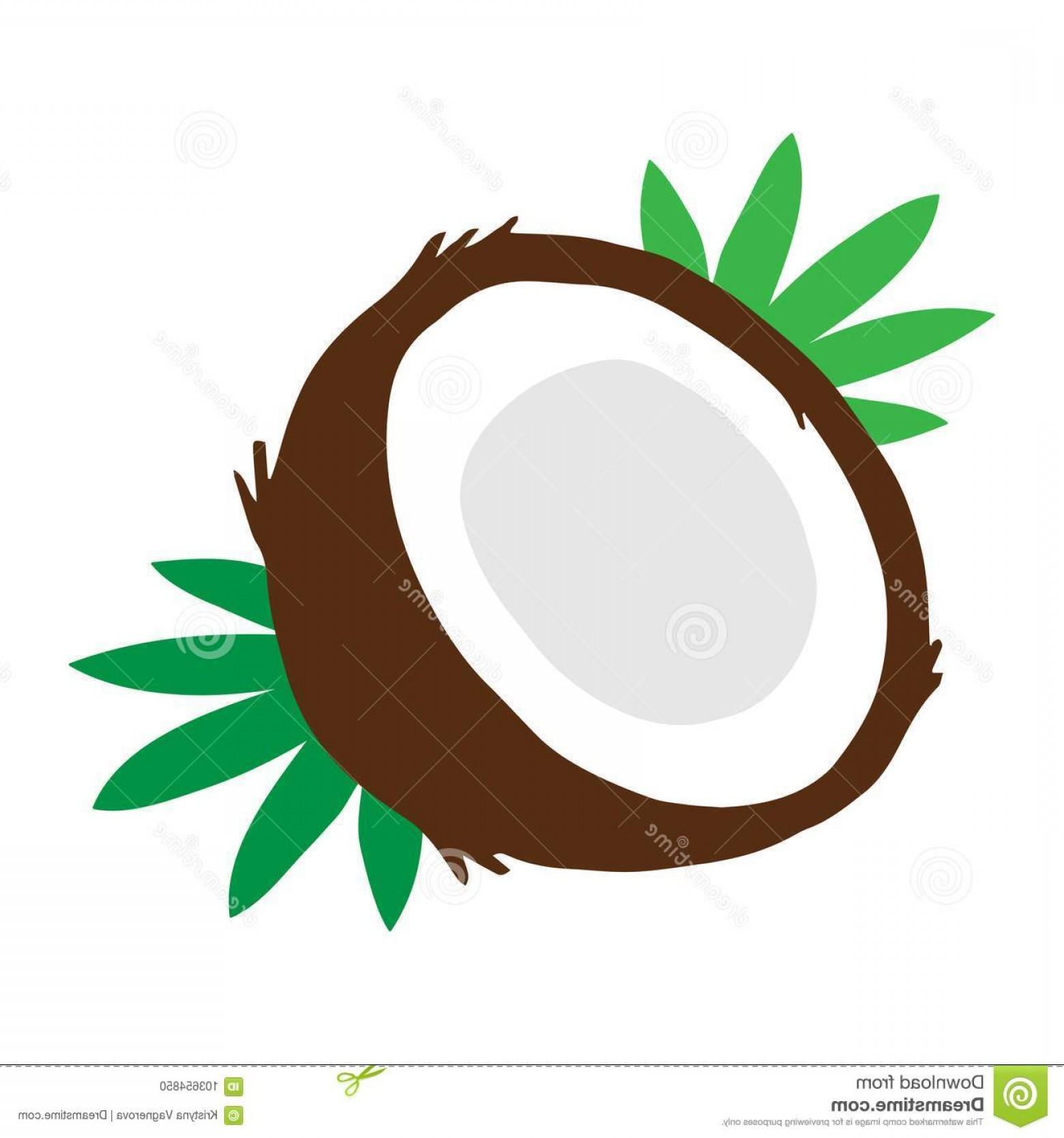 1560x1668 coconut fruit leaves vector coconut vector illustration drawing