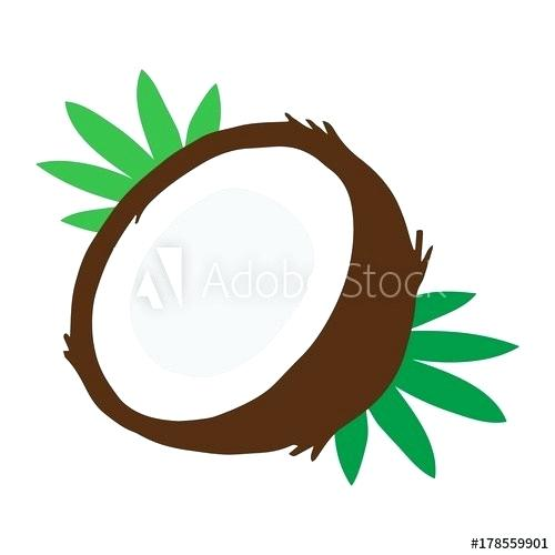 500x500 drawing coconut coconut vector illustration drawing coconut cut