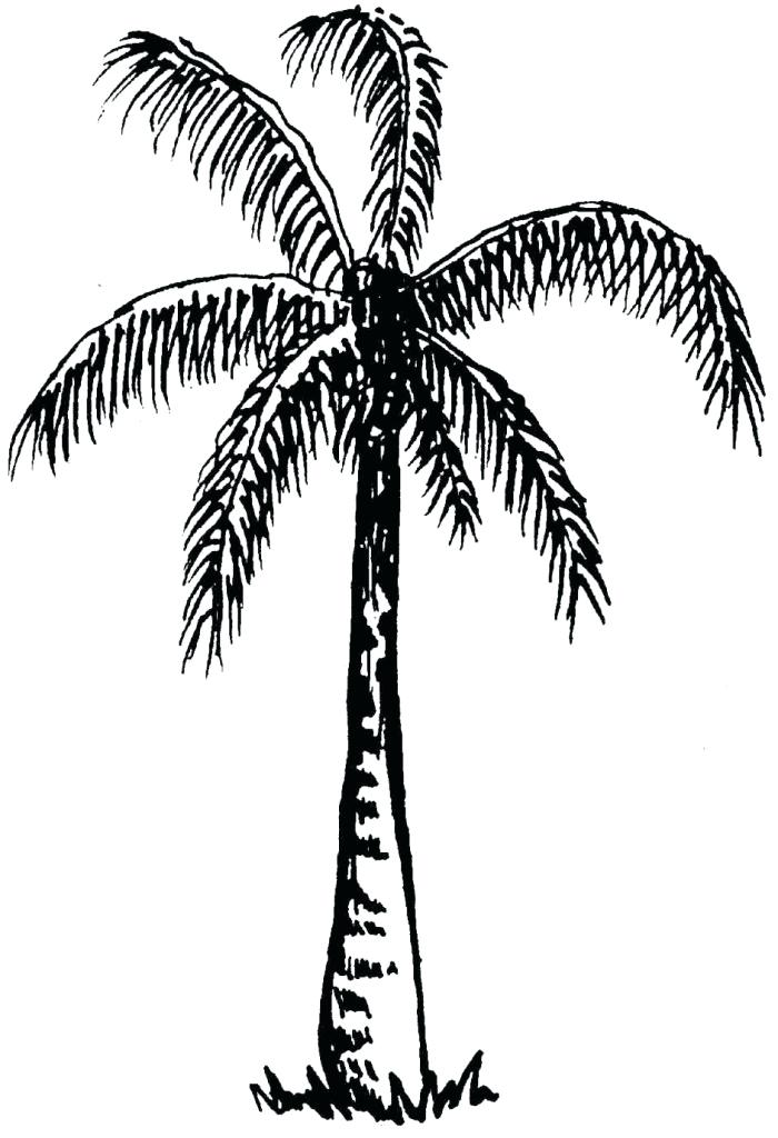 700x1024 drawing of palm trees palm tree drawing drawing palm tree vector