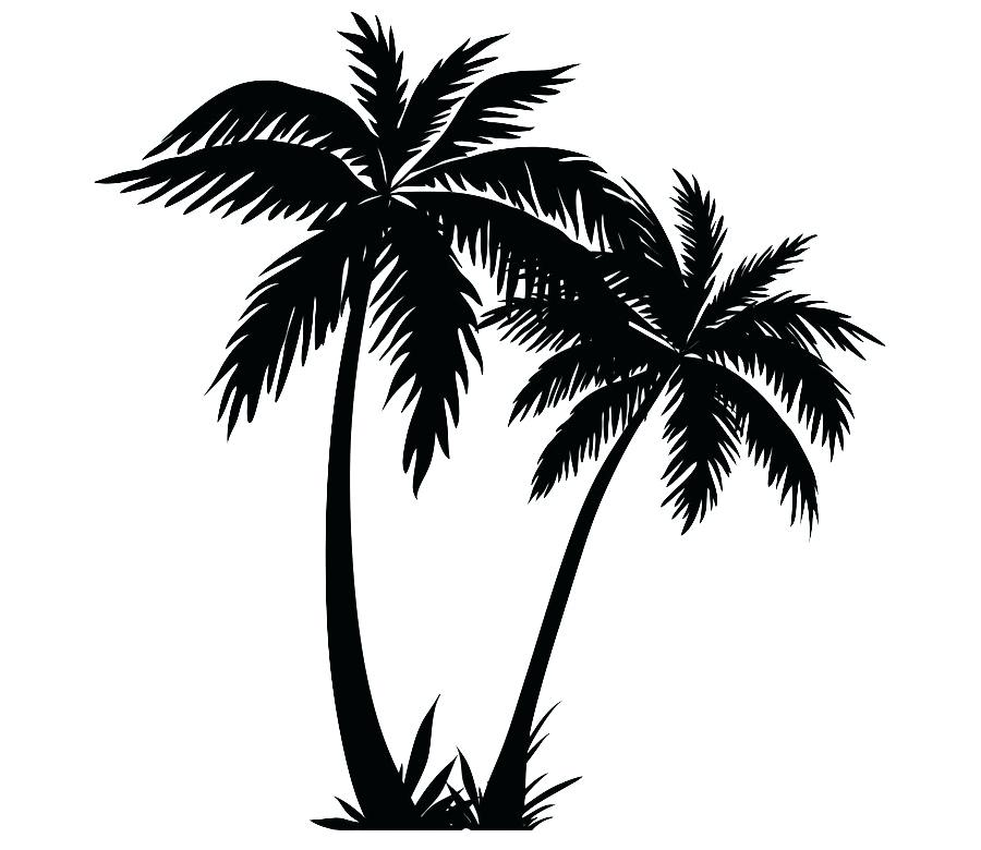 900x780 Drawing Palm Trees Line Drawing Palm Trees
