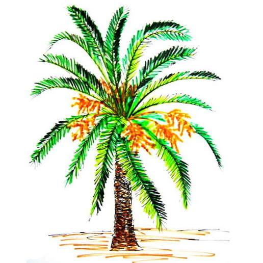 516x516 How To Draw A Coconut Palm Tree