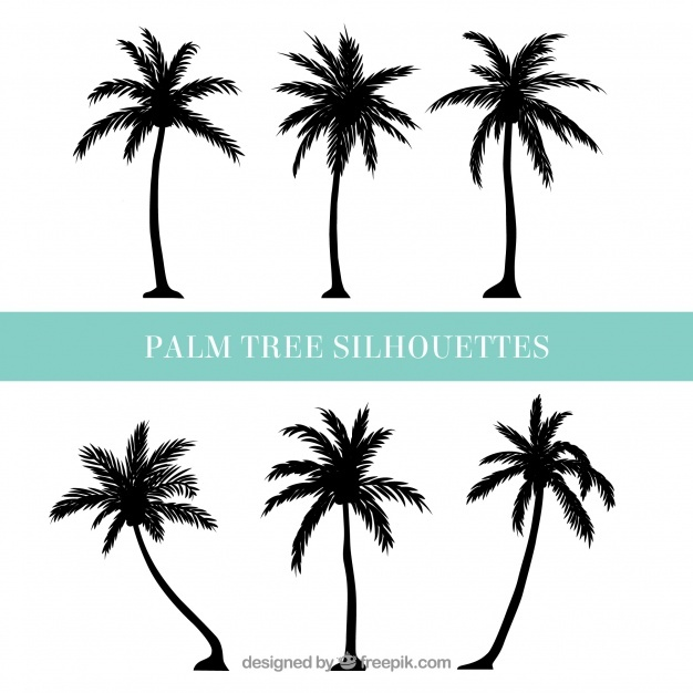626x626 Palm Tree Vectors, Photos And Free Download