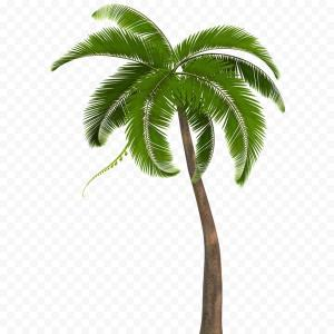 300x300 Png Coconut Drawing Arecaceae Tree Silhouette Palm Tre Soidergi