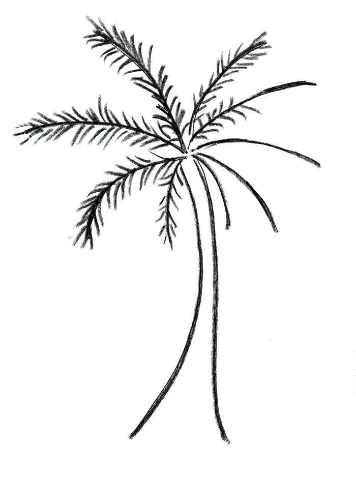 700x940 Simple Palm Tree Drawing Free Coconut Tree Drawing Download Clip