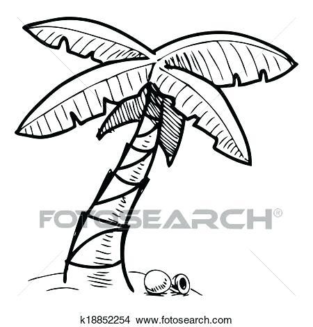 450x470 Sketch Palm Tree Pencil Sketch Palm Tree