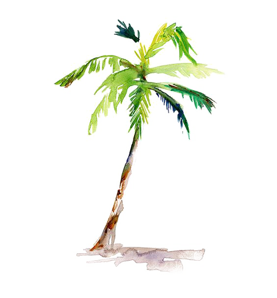 564x607 Stem Drawing Palm Tree, Picture