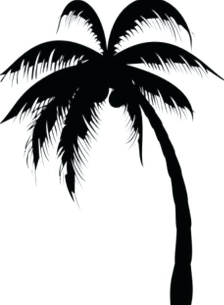 457x623 Plam Tree Drawing