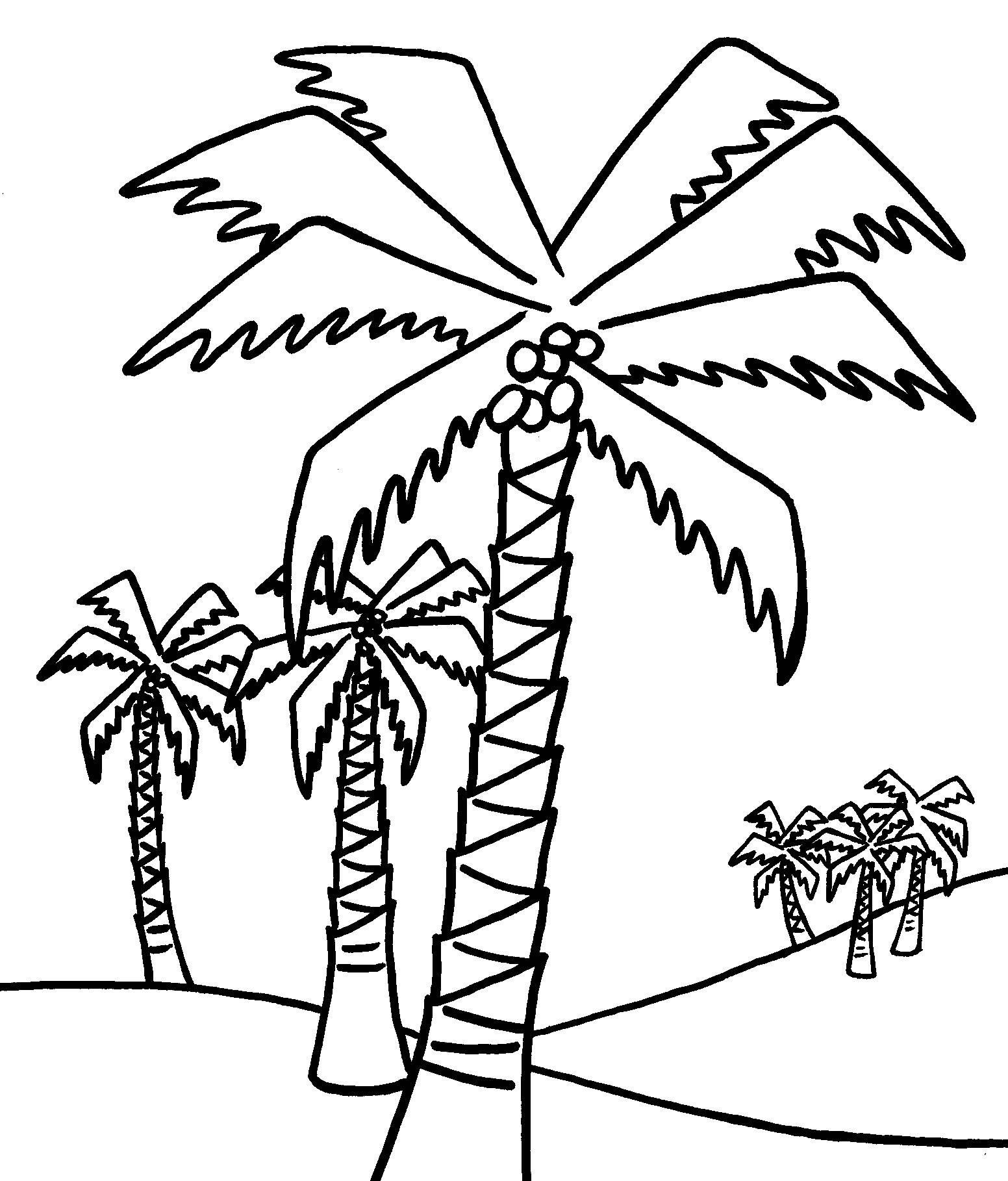 1552x1818 Coconut Palm Tree Coloring Pages Awesome Palm Tree Color