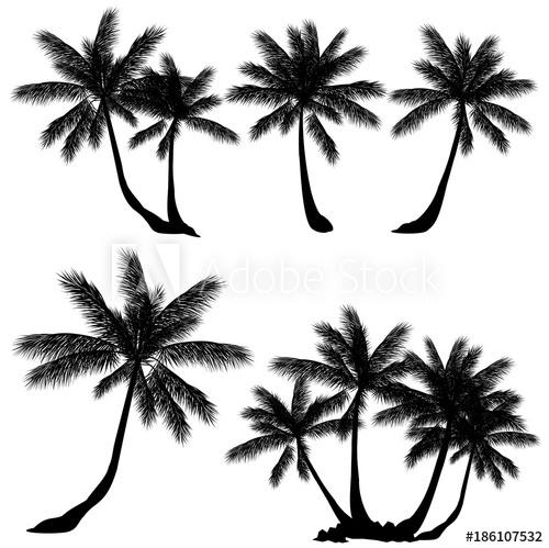 500x499 Coconut Palm Tree