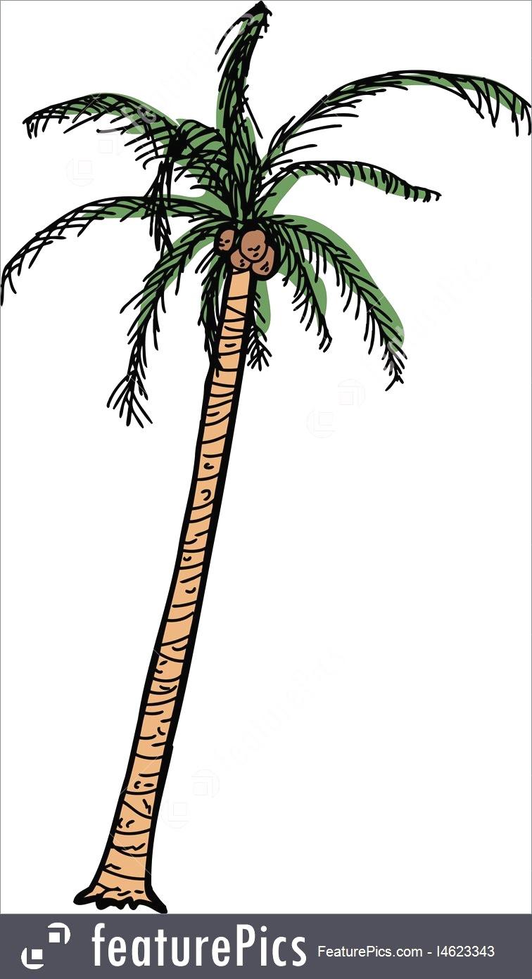 756x1392 Isolated Cartoon Coconut Palm Stock Illustration