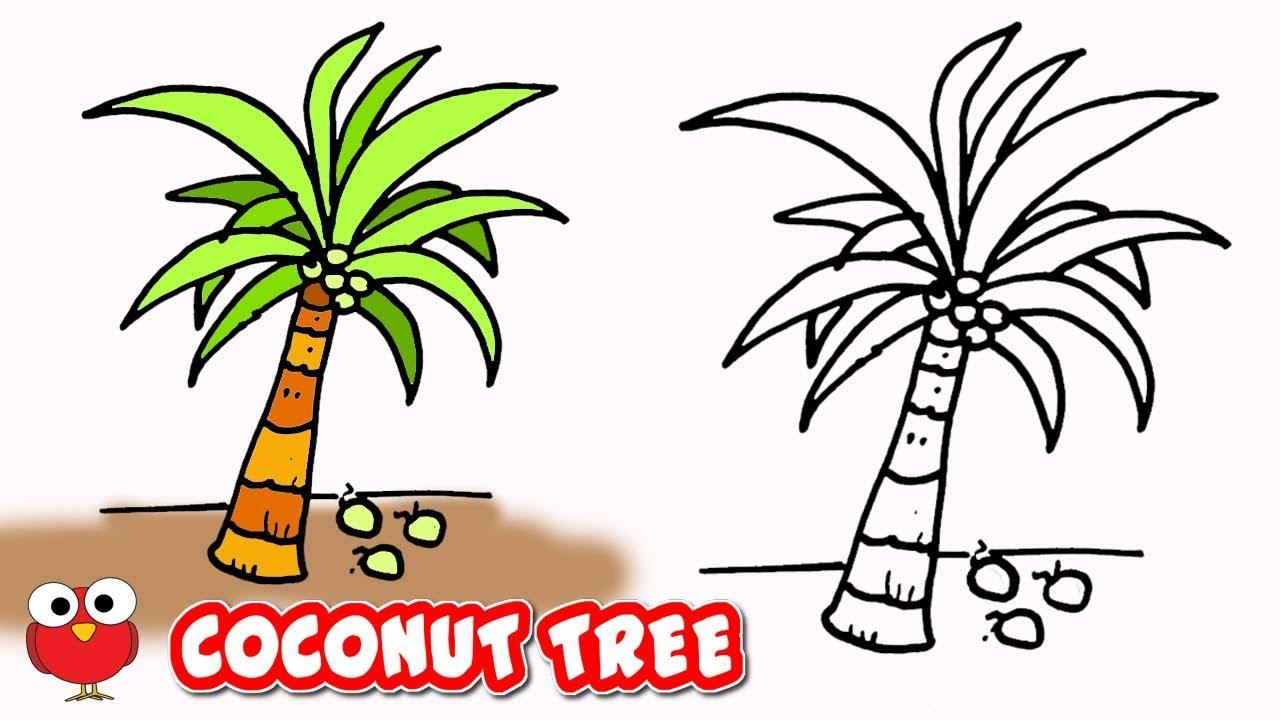 1280x720 Draw Coconut Tree Step