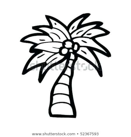 450x470 drawing of coconut quirky drawing of coconut palm tree drawing
