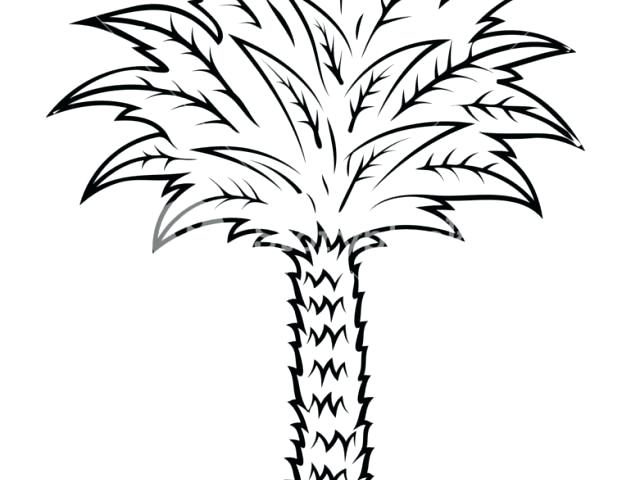 640x480 easy palm tree easy palm tree drawing easy palm tree drawing