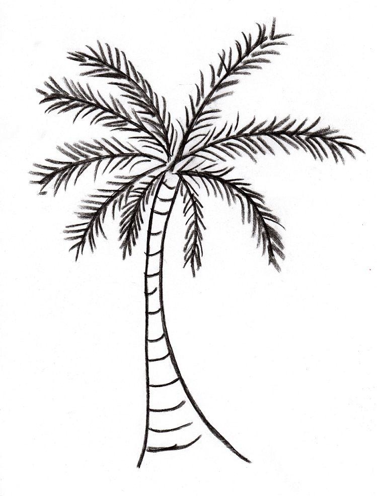 749x984 Latest Tribal Coconut Palm Tree Drawingheather Schaefer