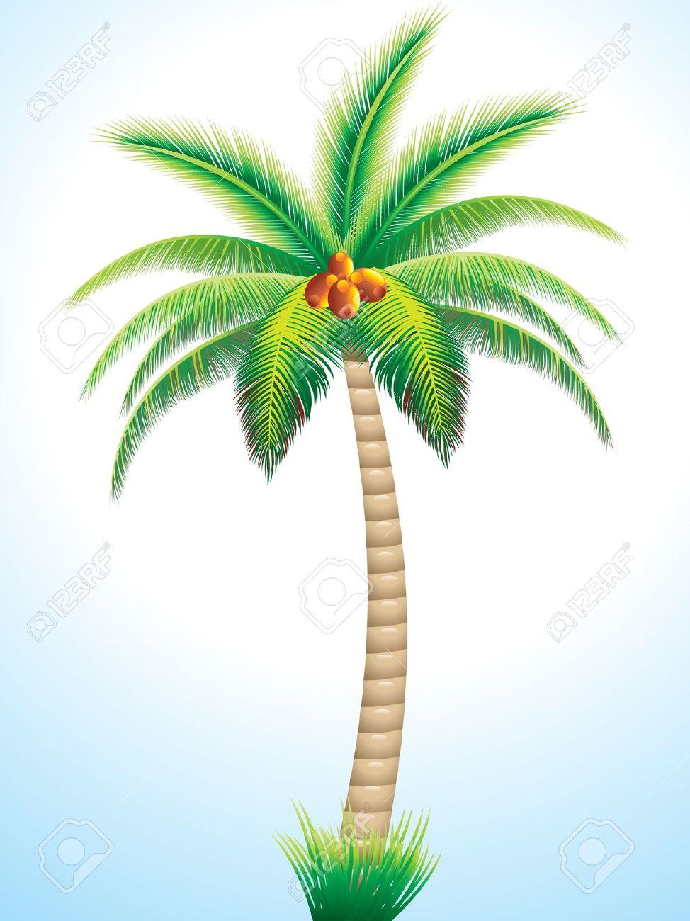 974x1300 Coconut Tree Drawing Clip Art