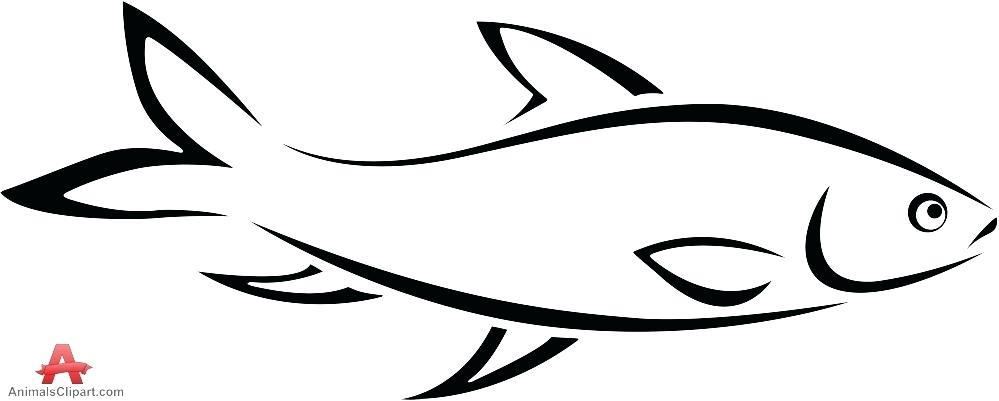 999x401 outline fish fish outline clown fish outline drawing