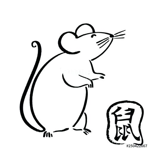 500x500 drawing of rat how to draw a rat step drawing rate meaning