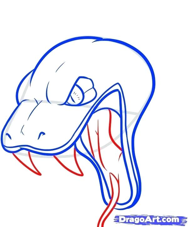 600x722 drawing of snake how to draw snake step coiled snake drawing
