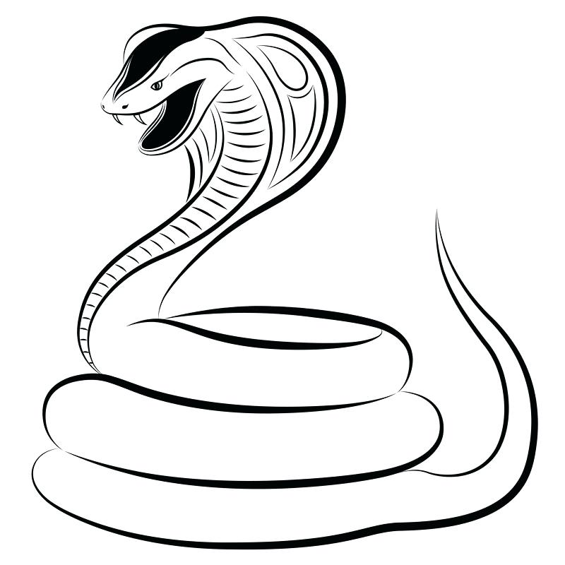 800x800 snake drawings how to draw snake step snake drawings in pencil