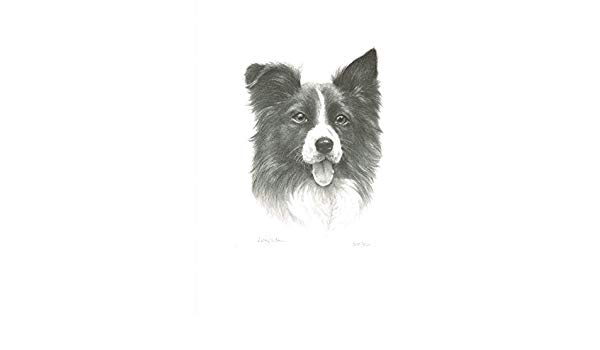 600x350 sandra leighton limited edition border collie pencil drawing