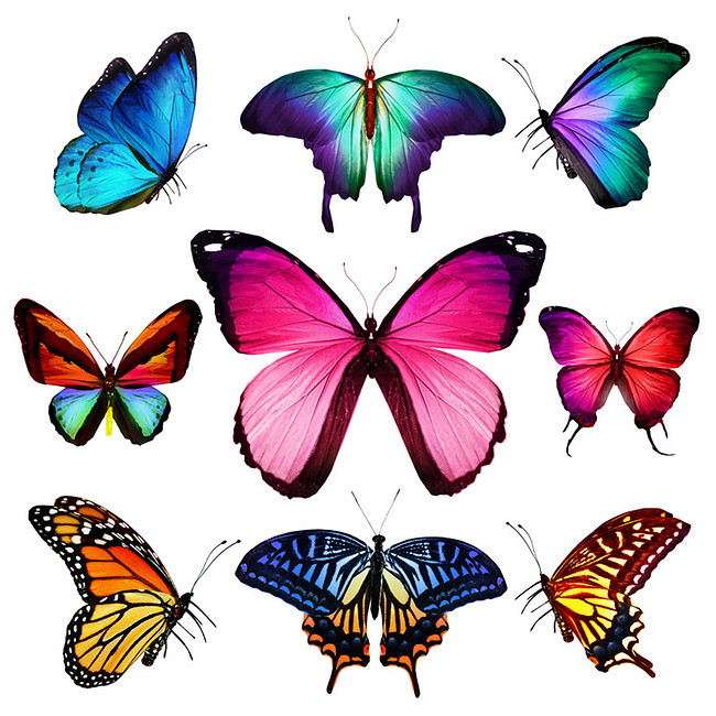 650x650 colorful butterfly hand drawing hd, hd, butterfly, colorful