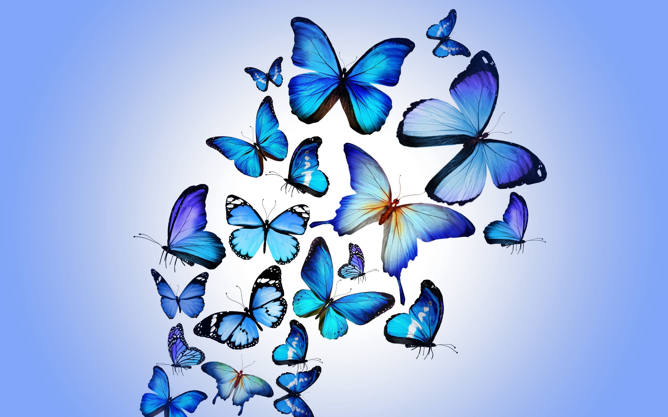 2560x1600 Download Wallpaper Butterfly, Colorful, Blue, Drawing