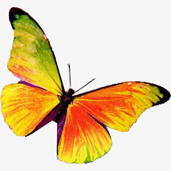 564x564 Drawing Butterfly, Butterfly Clipart, Colorful Butterfly, Yellow