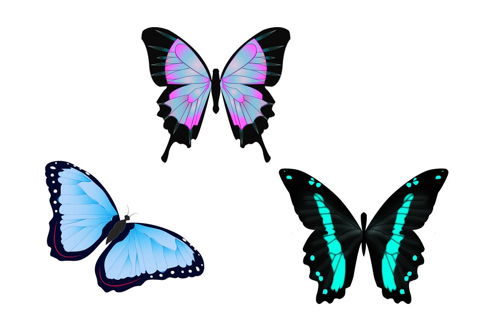 960x637 Free Photo Illustration Wall Color Drawing Colors Butterflies