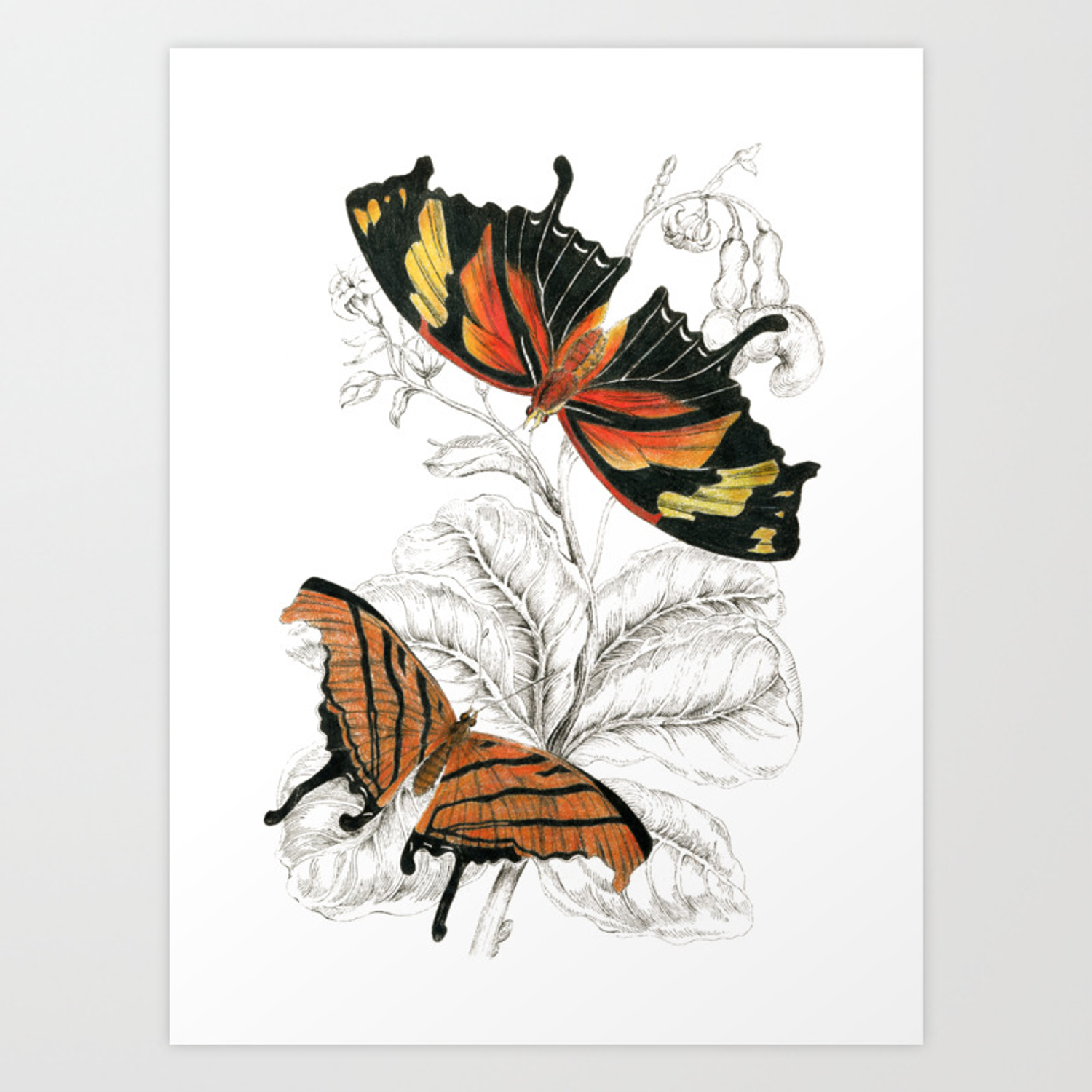 1500x1500 Scientific Colorful Butterfly Entomology Drawing Art Print