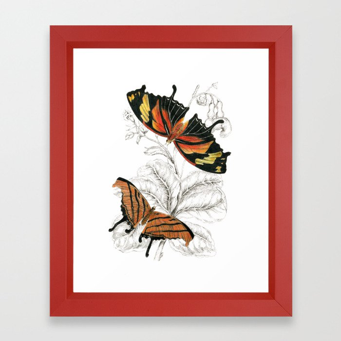 700x700 Scientific Colorful Butterfly Entomology Drawing Framed Art Print