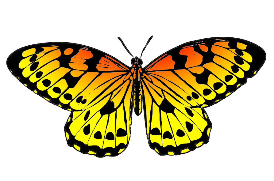 893x591 Butterfly Clipart
