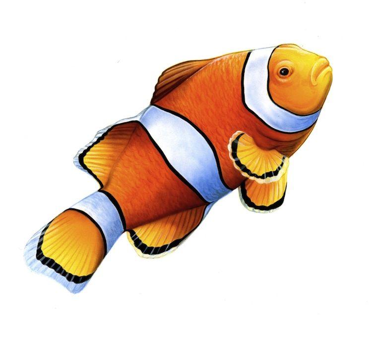 750x685 clown fish fish illustration, watercolor fish, fish drawings