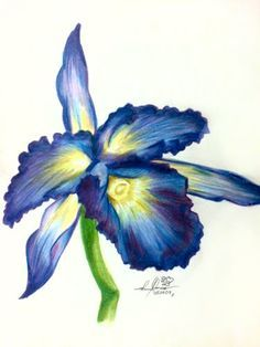 Colour Drawing Pictures Of Flowers