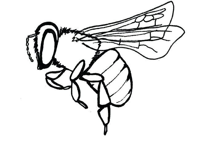 650x464 drawing of bees bee drawing bees bees drawing out comb