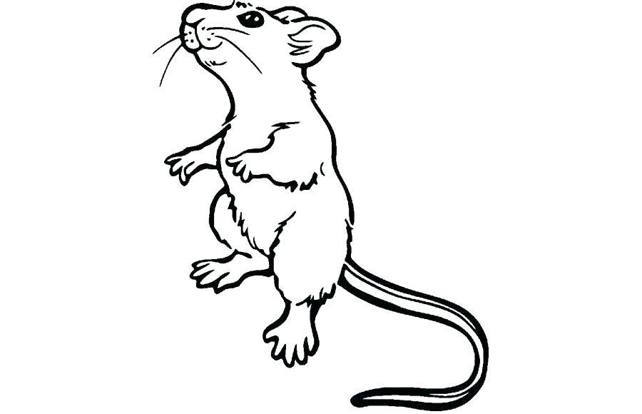 900x580 Easy To Draw Rat Lali