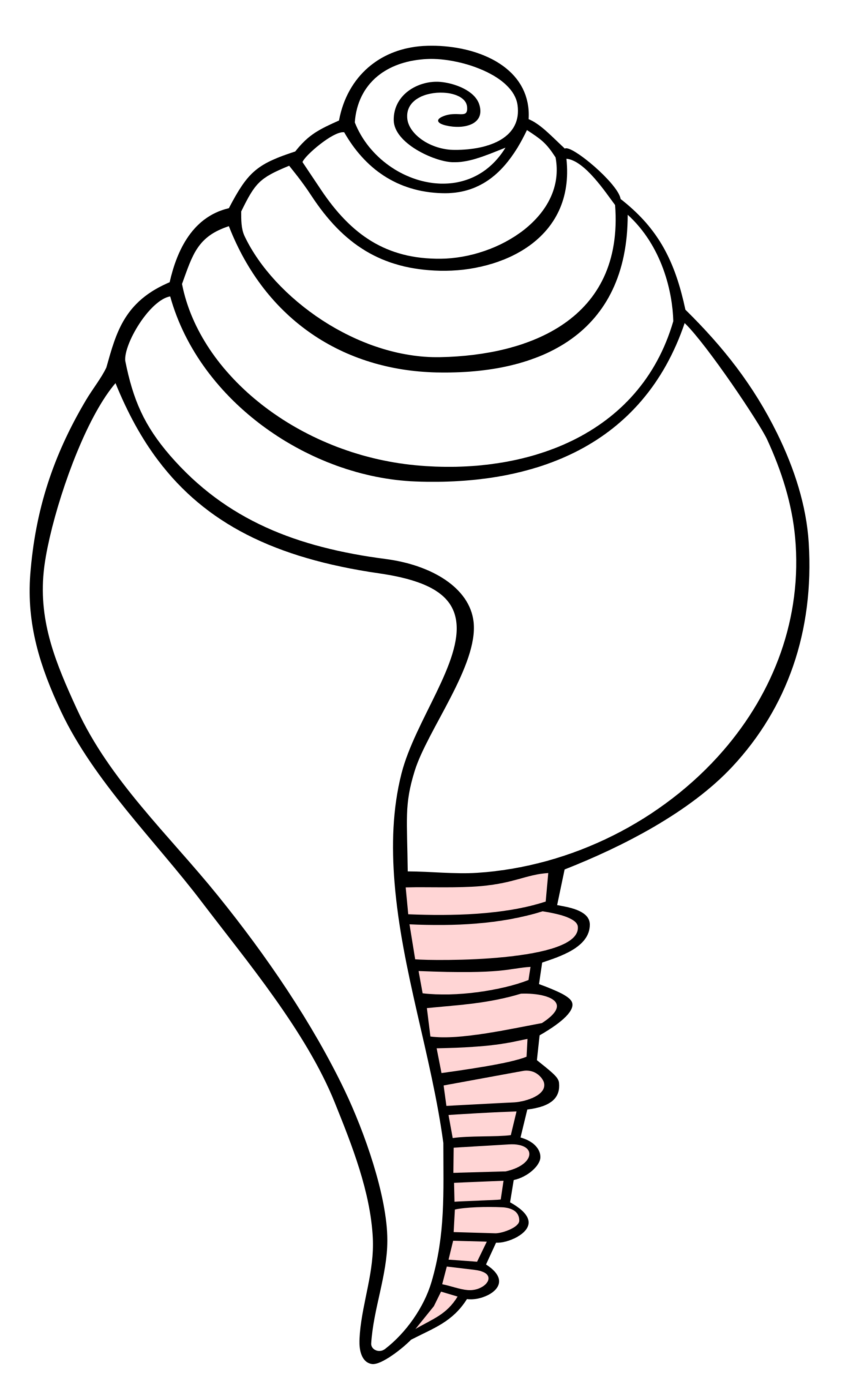Conch Shell Drawing