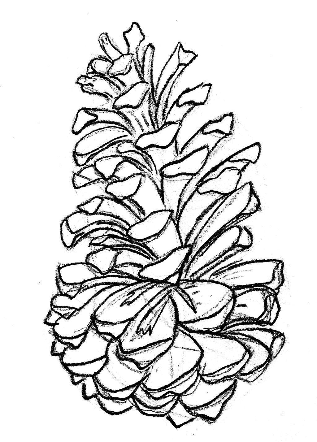 1024x1428 Pine Cone Drawing