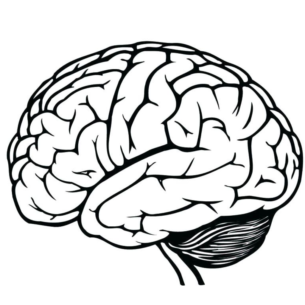 1024x1024 Huge Collection Of 'line Drawing Brain' Download More Than