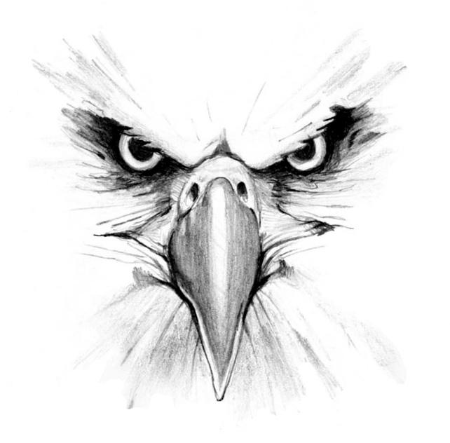 642x632 Drawn Eagle Eagle Eye