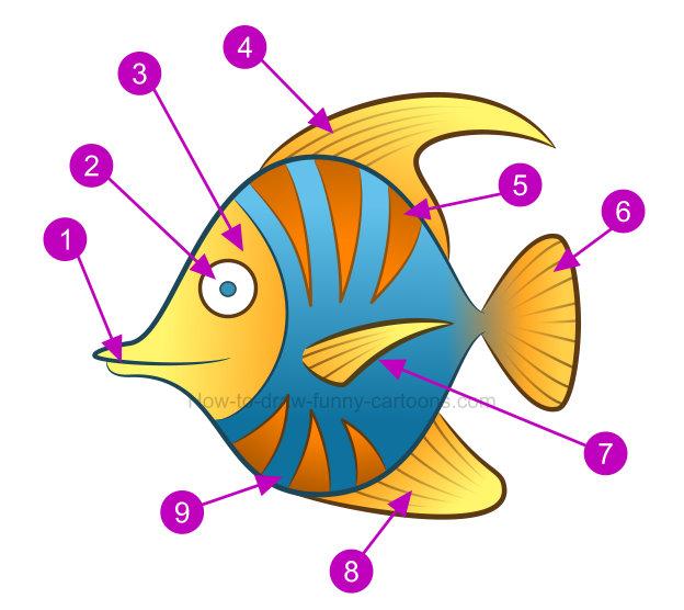 624x556 Cool Fish Cliparts