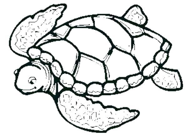 618x437 easy turtle drawings a turtle easy ninja turtle drawings