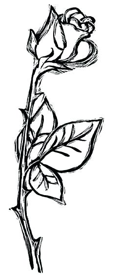 240x565 Rose Vines Drawings Image Titled Draw A Jungle Vine Step