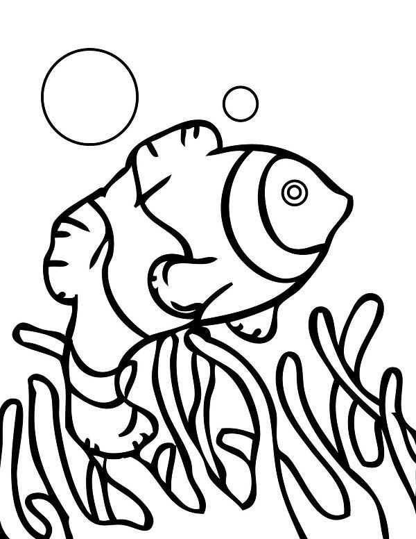 Coral Reef Fish Drawing | Free download on ClipArtMag