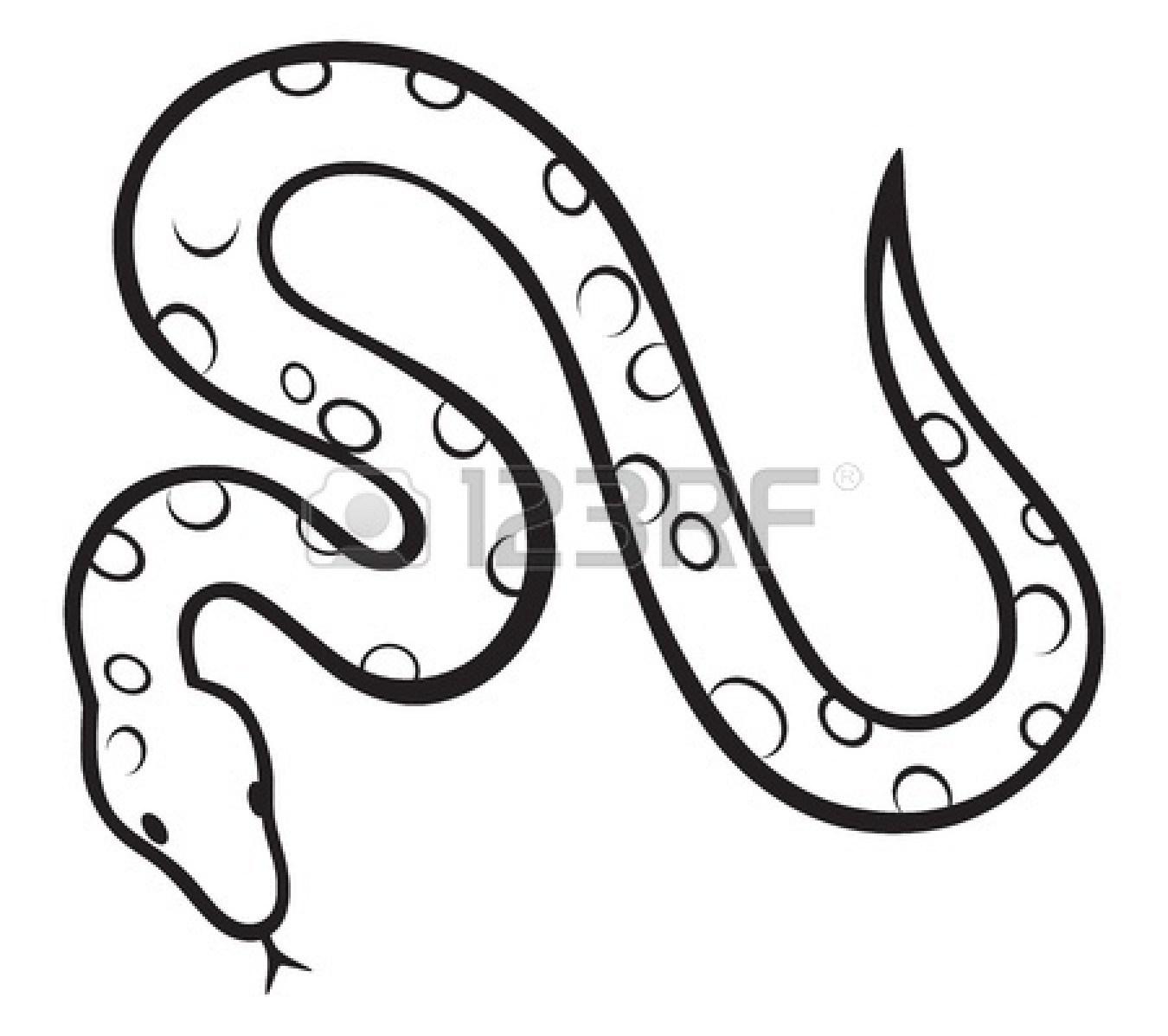Coral Snake Drawing