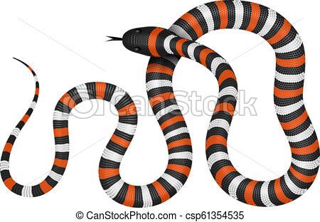450x312 coral snake vector illustration coral snake vector illustration
