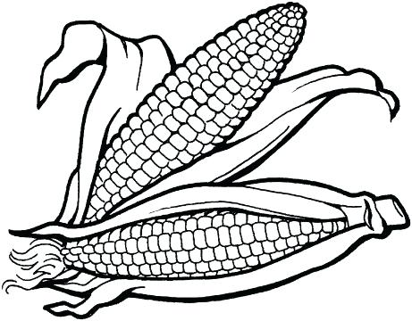 461x360 Corn On The Cob Coloring