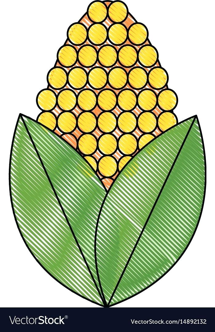 700x1080 Drawing Of Corn Corn Sketch Icon Easy Corn On The Cob Drawing